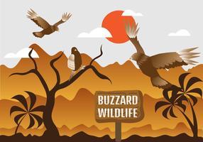 Buzzard Wildlife Illustration