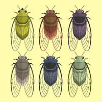 Cicada Bug Vector Collection