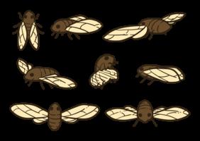 Cicadavektorer