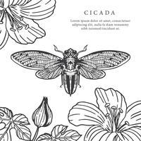 Cicada, mão, desenhado, fundo, vetorial