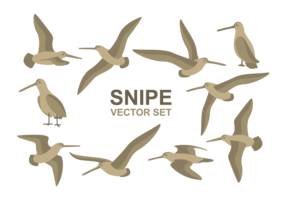 Snipe Cartoons Vector