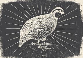 Vintage Quail Illustration