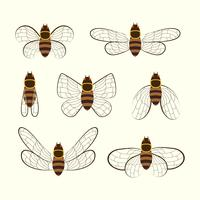 Vecteur de Cicada