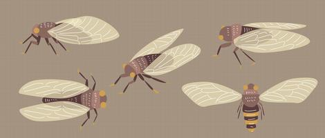 Cicada Insect Vector Flat Illustration