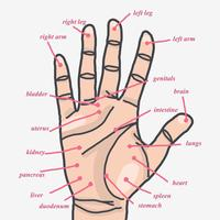 Hand Acupuncture Zones