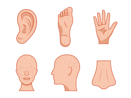 Acupuncture Point Vector