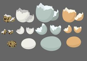 Blank Eggshell Vector Set