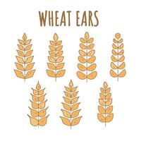 vetor de orelhas de trigo grátis