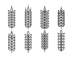 Wheat ears vector set