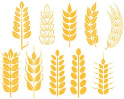 Free-wheat-vectors
