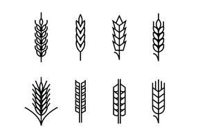 Wheat ears set icons vector