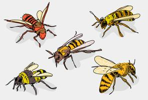 Hornets Dibujado a mano Vector Illustrtaion