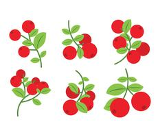 Cranberries Vector Icons