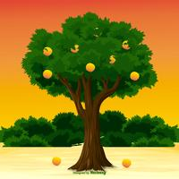 Peach Tree Illustration