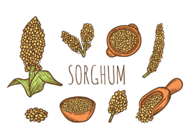Hand Drawn Sorghum Vectors