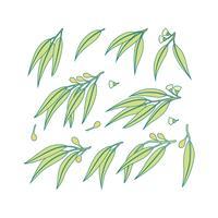 Vector libre de eucalipto