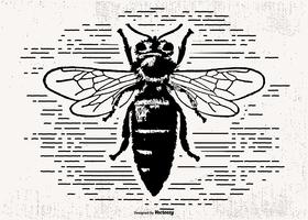 Drawn Hornet Vector Illustration