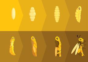 Vecteur gratuit: Métamorphoses de frelons
