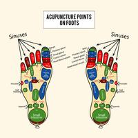 Points d'acupuncture Vector