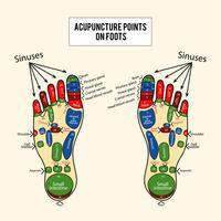 Puntos de acupuntura Vector