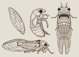 Cicada Set Vector dessinés à la main