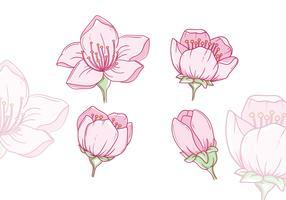 Vecteurs de fleur de prunier dessinés à la main