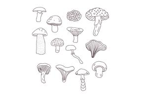 Botanical Mushroom Drawings vector