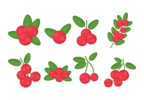 Free Cranberries Vector Collection