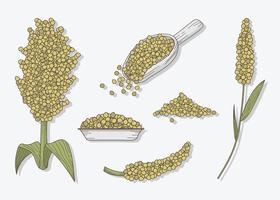 Sorghum Pack Vector