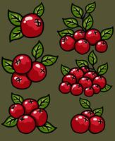 Vector Cranberry Cartoon Icon Set