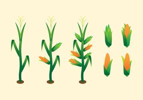Simple Corn Stalk Vectors