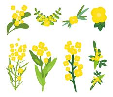 Free Canola Flowers Vector