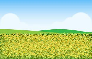 Mustard Flowers in Field Illustration