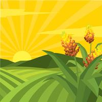 Sorghum Field Illustration  Free Vector