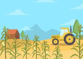 Fondo plano del vector del campo de maíz