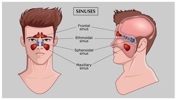 Free Sinus Vector