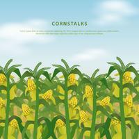 Corn Stalks Field Illustration