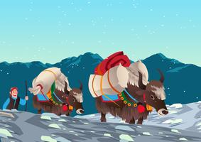 Yaks Carrying Heavy Loads
