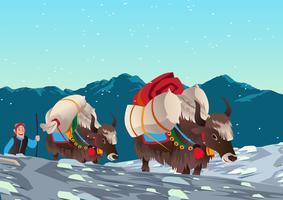 Yaks transportant des charges lourdes