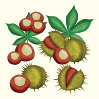 Vector Buckeye illustratie