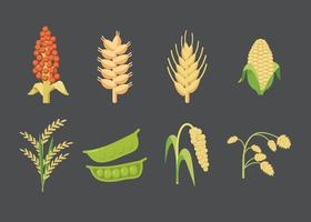 Vetor de grãos e sementes
