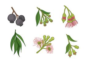 Gum Tree Flower Free Vector