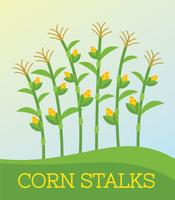 Gratis Corn Stalk Vector