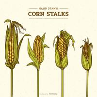 Colored Hand Drawn Corn Stalks Vector Illustration