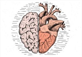 Free Hand Drawn Vector Brain and Heart Illustration