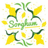 Sorghum Vector