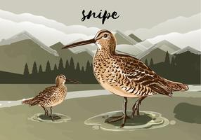 Snipe Bird Vector Illustration