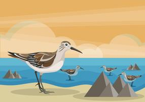 Snipe Bird on Beach Vector Illustration