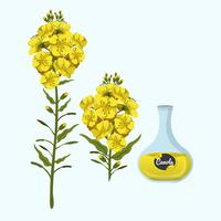 Canola Oil Vector Illustration
