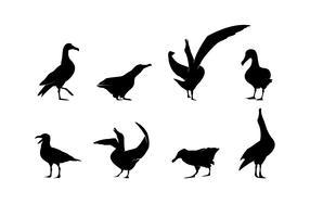Stående Albatross Silhouette Gratis Vector